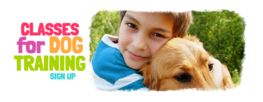 Dog Training for Rescue Dogs by Children